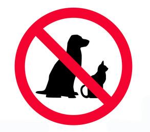 transporte de animais é proibido no serviço de motoboy